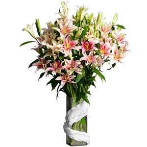 Oriental Lilium