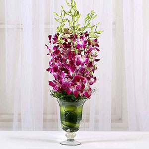 Image of Blissful Orchids