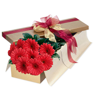 Prove to your beloved just how precious he/she is for you with this charming Gerberas so beautifully arranged that it just brings warm thoughts of you to mind!