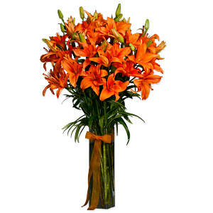Asiatic Lilium Orange