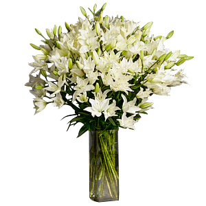 Oriental Lilium White