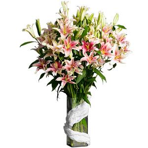 Oriental Lilium