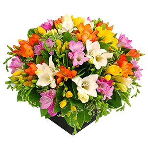 Freesias Cube