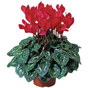 Red Flowering Plant