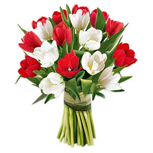 Gracious Tulips