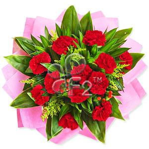 Carnation Adoration